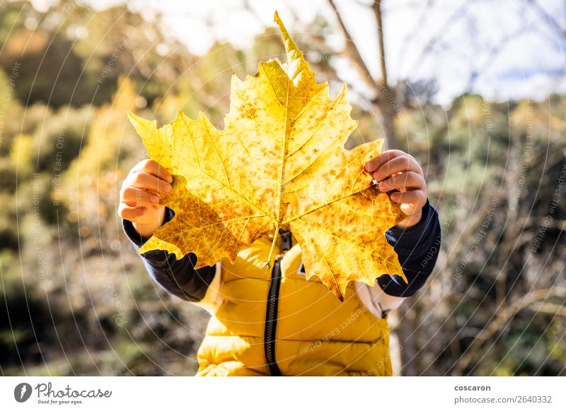Little kid with a big leaf in autumn Lifestyle Joy Happy Beautiful Face Playing Child Human being Baby Toddler Infancy 1 3 - 8 years Nature Plant Autumn Winter