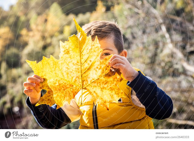 Little kid with a big leaf in autumn Lifestyle Joy Happy Beautiful Face Playing Vacation & Travel Winter Child Human being Baby Toddler Boy (child) Infancy 1