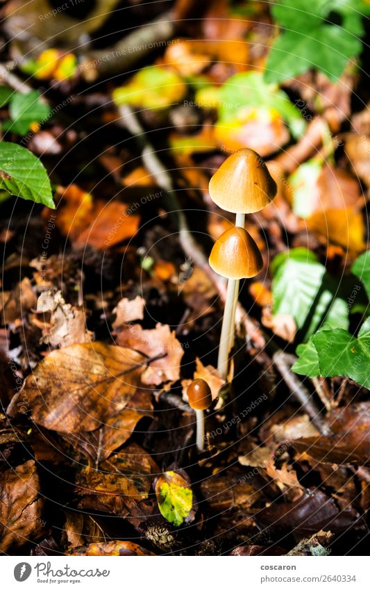 Three mushrooms on the undergrowth. Poisonous mushrooms Nature Old Summer Plant Beautiful Green Landscape White Flower Forest Winter Dark Food Autumn Natural