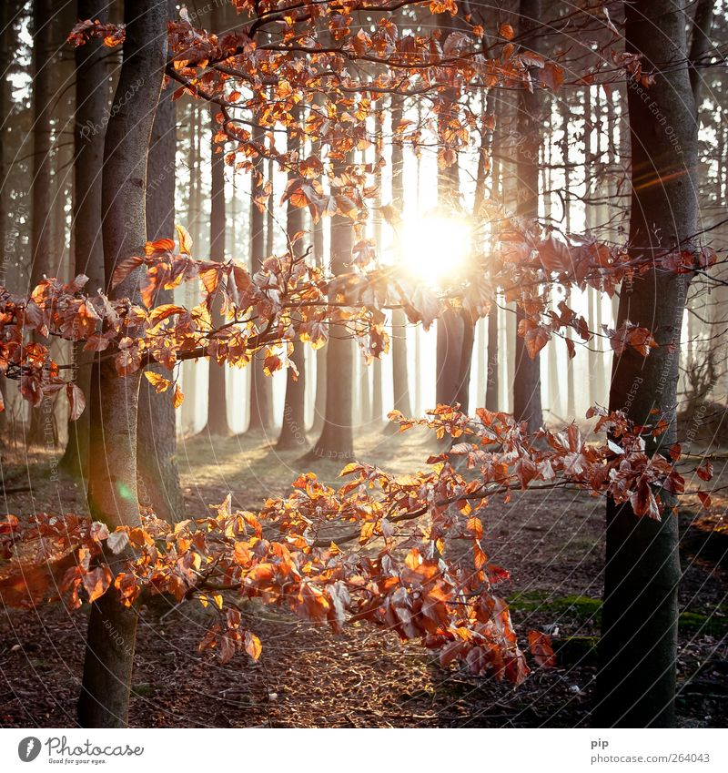 grove Environment Nature Landscape Plant Sun Sunrise Sunset Spring Autumn Beautiful weather Tree Leaf Tree trunk Forest Fresh Natural Brown Hope Colour photo