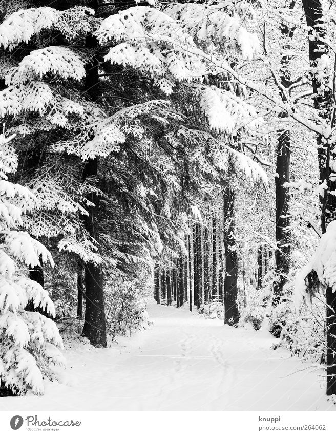 snow-covered forest road Nature Plant Sun Sunlight Winter Beautiful weather Snow Snowfall Tree Forest Cold Snowscape Winter vacation Woodground Tracks