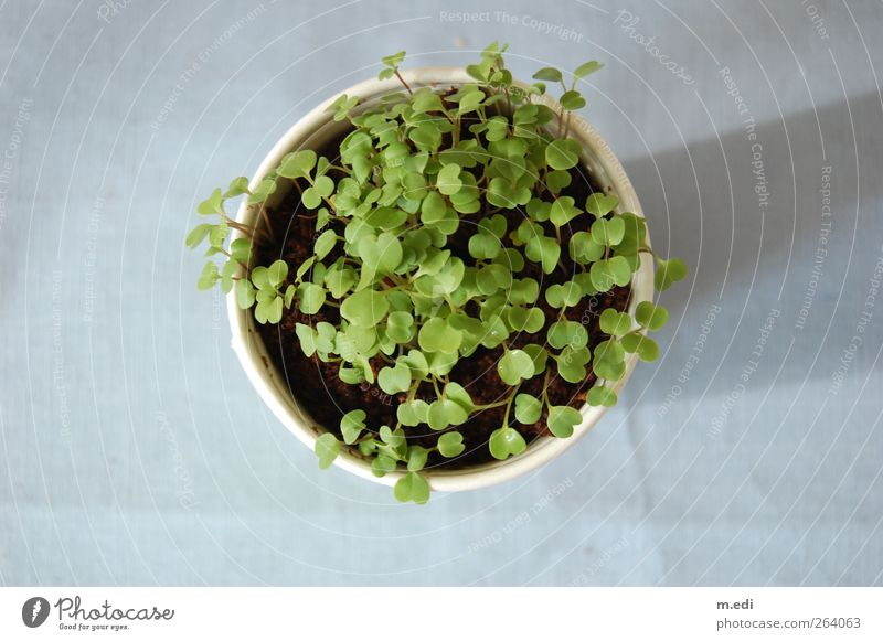 Nature Blue Green Plant Flower Growth Agricultural crop Pot plant Rucola