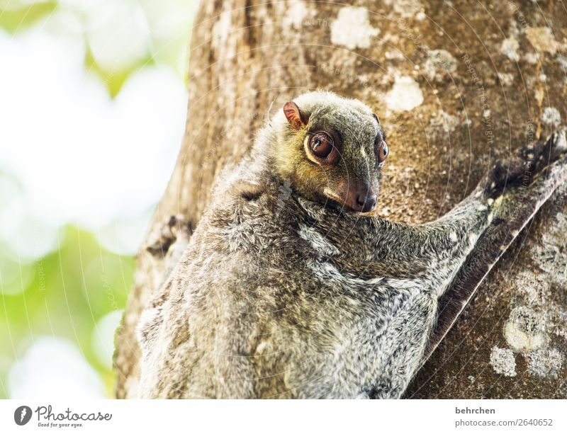 Vacation & Travel Tree Animal Far-off places Eyes Tourism Exceptional Freedom Trip Wild animal Adventure Fantastic Observe To hold on Tree trunk Asia