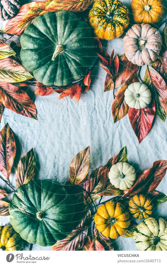 Nature Background picture Life Autumn Style Garden Living or residing Design Decoration Vegetable Hip & trendy Still Life Autumn leaves Difference Hallowe'en