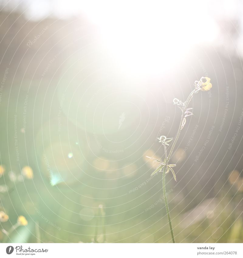 Nature Plant Sun Summer Flower Environment Meadow Spring Garden Background picture Idyll Delicate Square October May Lens flare
