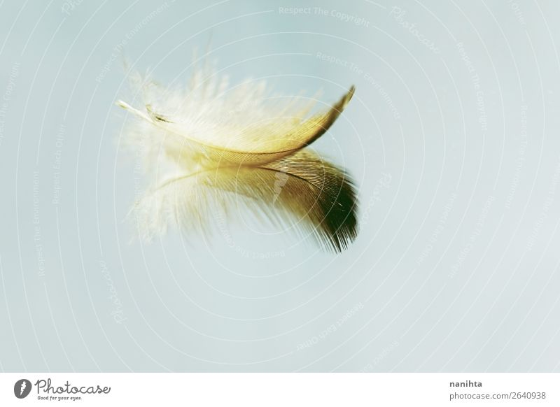 Little feather reflected in a mirror Art Feather Mirror Mirror image Esthetic Fresh Bright Beautiful Uniqueness Near Natural Clean Gold Turquoise Moody