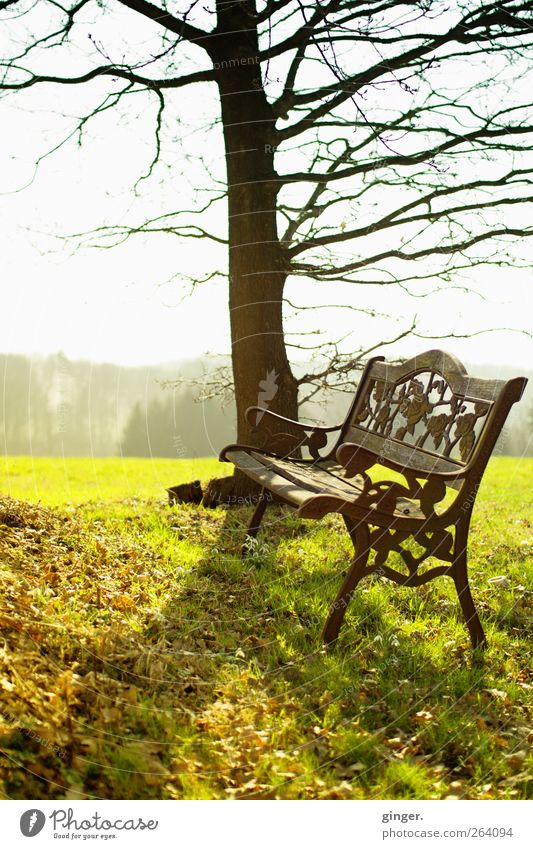 *Northbound*, have a seat! Environment Nature Landscape Plant Sky Sun Spring Climate Weather Beautiful weather Warmth Tree Grass Meadow Friendliness Fresh Brown