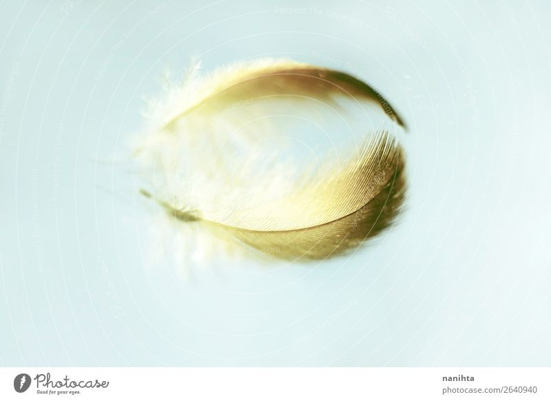 Reflection of a delicate feather Design Art Feather Mirror Mirror image Glass Crystal Esthetic Infinity Beautiful Uniqueness Small Near Original Clean Soft Gold
