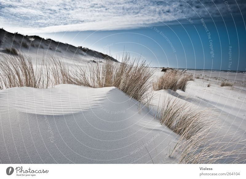 a place for *North traveller* Nature Landscape Sky Clouds Coast Beach North Sea Island Discover Relaxation Spiekeroog Dune Marram grass Colour photo