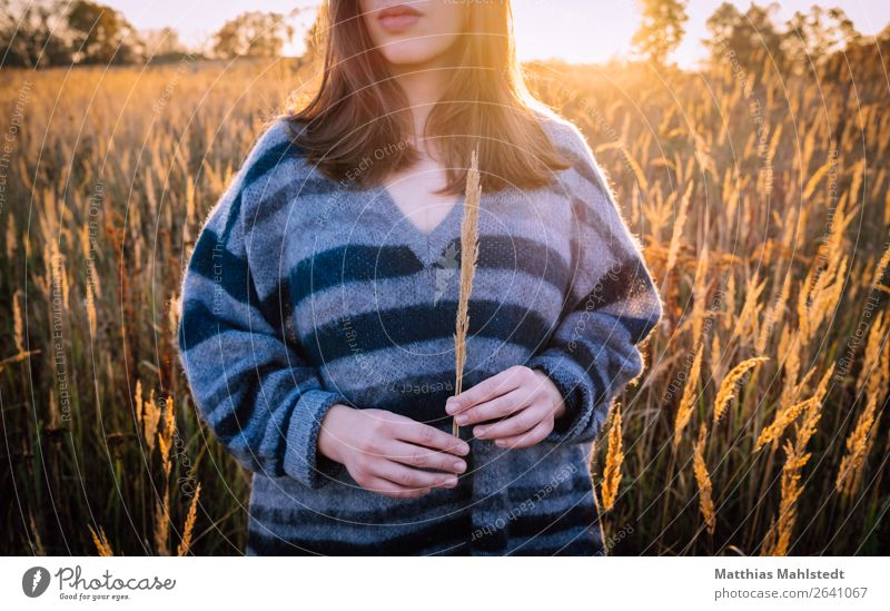 Young woman in the field Human being Feminine Youth (Young adults) 1 18 - 30 years Adults Nature Landscape Autumn Beautiful weather Field Sweater