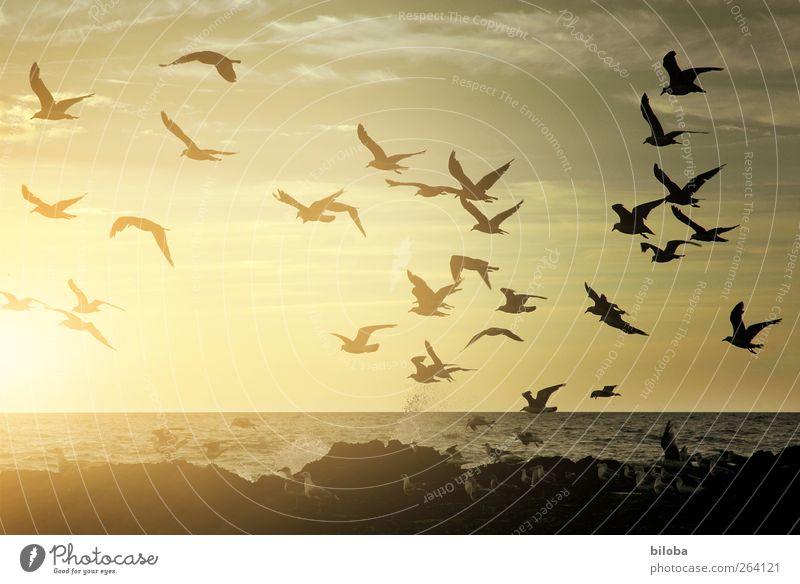 Animal Black Coast Gold Longing North Sea Seagull Wanderlust White crest Homesickness Flock of birds Belgium Sea bird