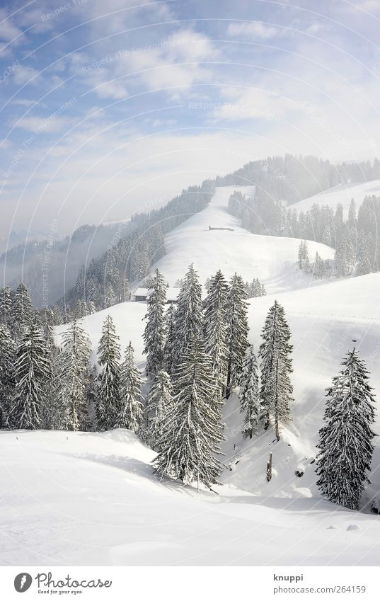 Winter on the Rigi Environment Nature Landscape Plant Sky Clouds Sun Sunlight Beautiful weather Fog Ice Frost Snow Tree Forest Hill Alps Mountain Peak
