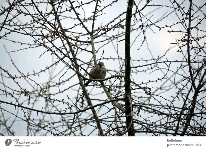 * North traveller* The sparrows whistle from the roofs! Nature Sky Clouds Sunlight Spring Winter Beautiful weather Plant Tree Bushes Wild plant Animal