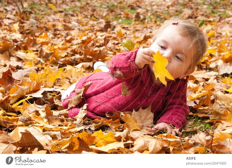 Baby discovering autumn leaves Lifestyle Joy Happy Playing Child Nature Autumn Warmth Leaf Park Forest Blonde Touch Discover To enjoy Happiness Natural Cute