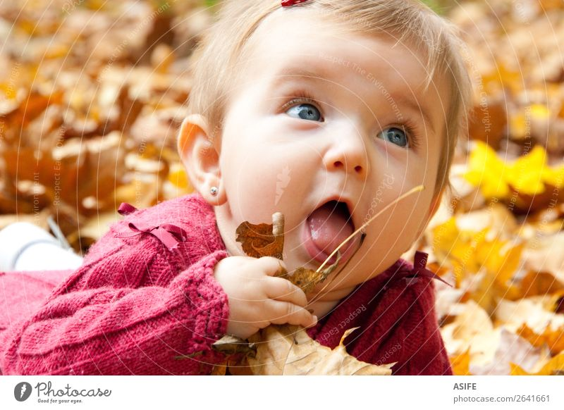 Cute baby girl eating autumn leaves Eating Lifestyle Joy Happy Playing Child Baby Mouth Nature Autumn Warmth Leaf Park Forest Blonde Touch Discover To enjoy