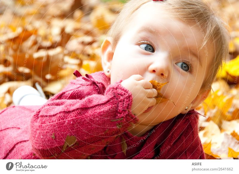 Baby girl eating autumn leaves Eating Lifestyle Joy Happy Playing Child Mouth Nature Autumn Warmth Leaf Park Forest Blonde Touch Discover To enjoy Happiness