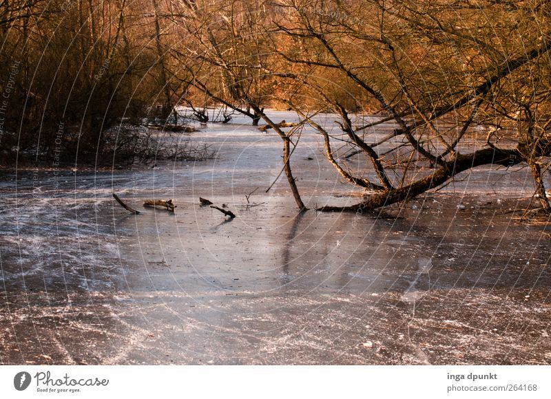 Northbound River- Happy Birthday! Environment Nature Landscape Plant Elements Winter Climate Ice Frost Tree River bank Cold Environmental protection