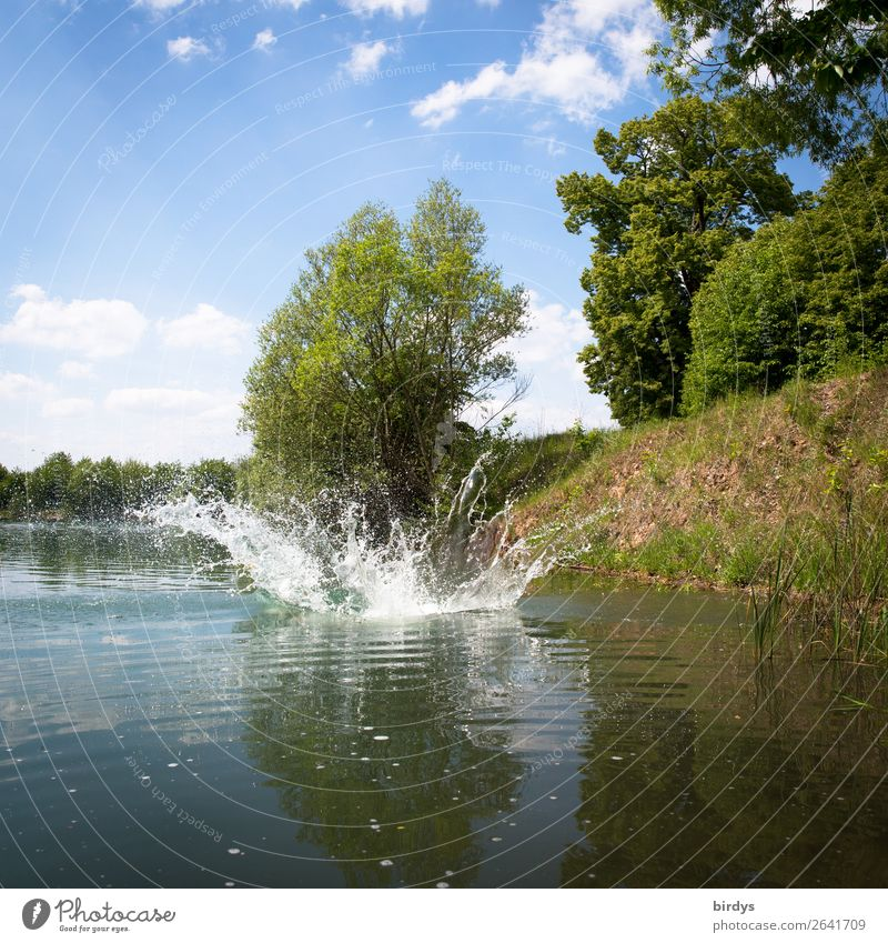 splash Nature Water Drops of water Sky Clouds Summer Beautiful weather Tree Lakeside Movement Authentic Uniqueness Wet Blue Yellow Green White Joy Life Energy