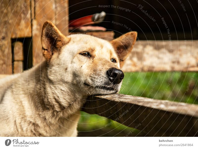 Vacation & Travel Nature Dog Beautiful Relaxation Animal Far-off places Environment Eyes Tourism Freedom Trip Adventure Cute Sleep Nose