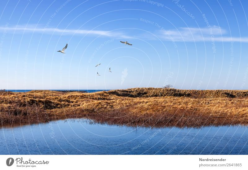 Sky Vacation & Travel Nature Blue Water Landscape Ocean Clouds Animal Far-off places Grass Tourism Freedom Bird Brown Moody