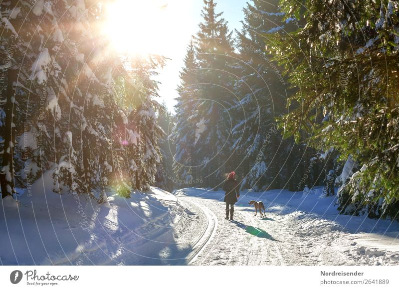 winter walk Trip Winter Snow Winter vacation Hiking Christmas & Advent Human being Feminine Woman Adults Nature Landscape Sun Tree Forest Lanes & trails Animal
