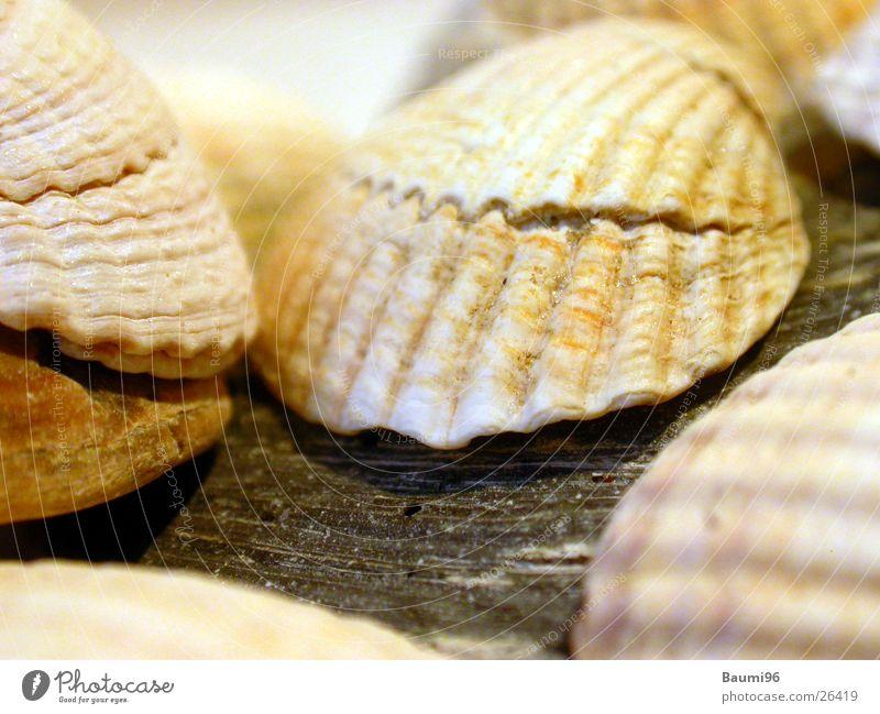seashells Mussel Beach Vacation & Travel Ocean Sun