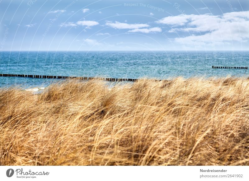 Spring on the Darß Vacation & Travel Tourism Summer Summer vacation Beach Ocean Nature Landscape Water Autumn Climate Beautiful weather Grass Coast North Sea