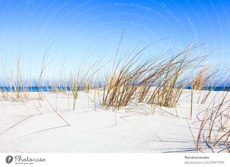 Dune grass at the Baltic Sea Vacation & Travel Tourism Camping Summer Summer vacation Beach Ocean Nature Landscape Sand Water Beautiful weather Plant Grass