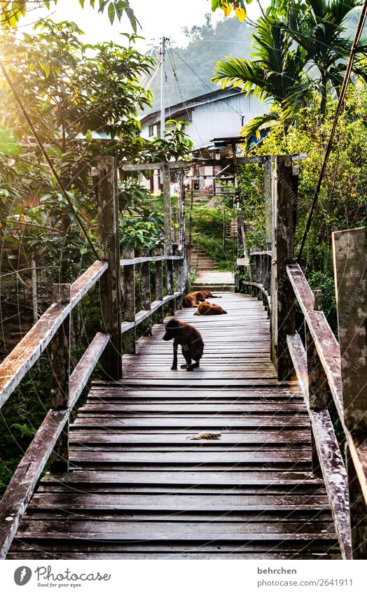 Vacation & Travel Nature Dog Beautiful Landscape Tree Far-off places Tourism Exceptional Freedom Trip Dream Idyll Adventure To enjoy Fantastic