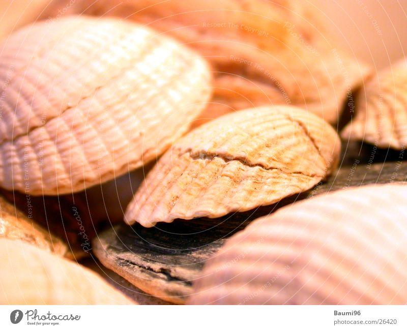 Sun Ocean Beach Vacation & Travel Mussel