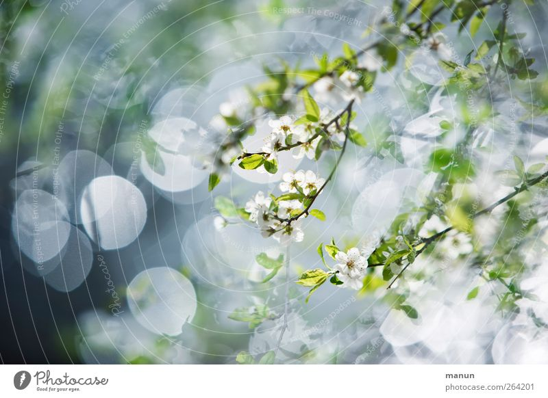 floral Nature Spring Tree Bushes Leaf Blossom Twigs and branches Blossoming Bright Kitsch Spring fever Light green Colour photo Exterior shot Deserted