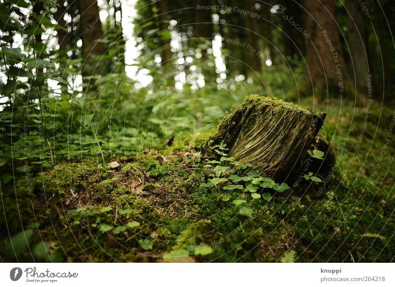fairytale forest Environment Nature Plant Sunlight Summer Beautiful weather Tree Bushes Moss Wild plant Forest Growth Old Green Black Tree trunk Tree stump