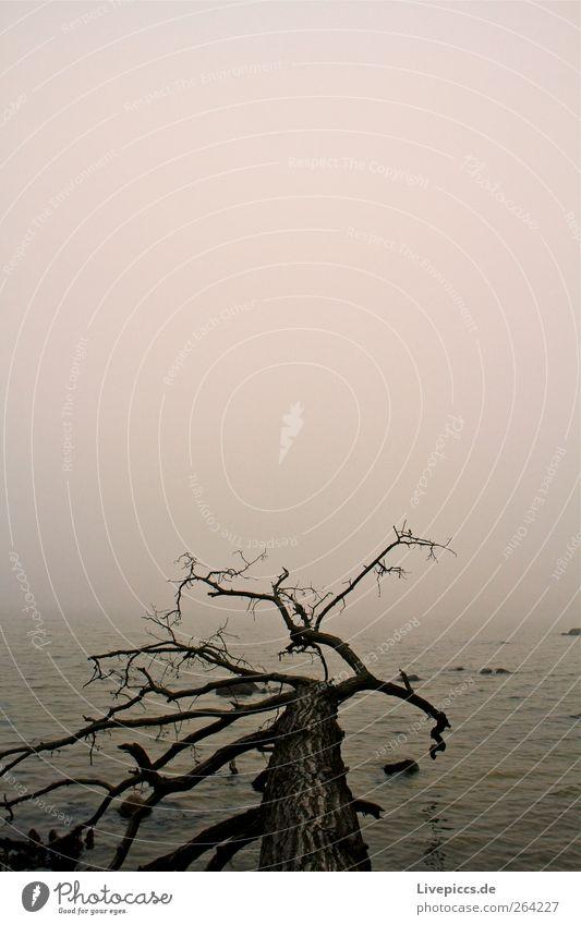 Sky Nature Old Water Tree Plant Black Dark Gray Coast Fog Lie Esthetic Tree trunk Fog bank Topple over