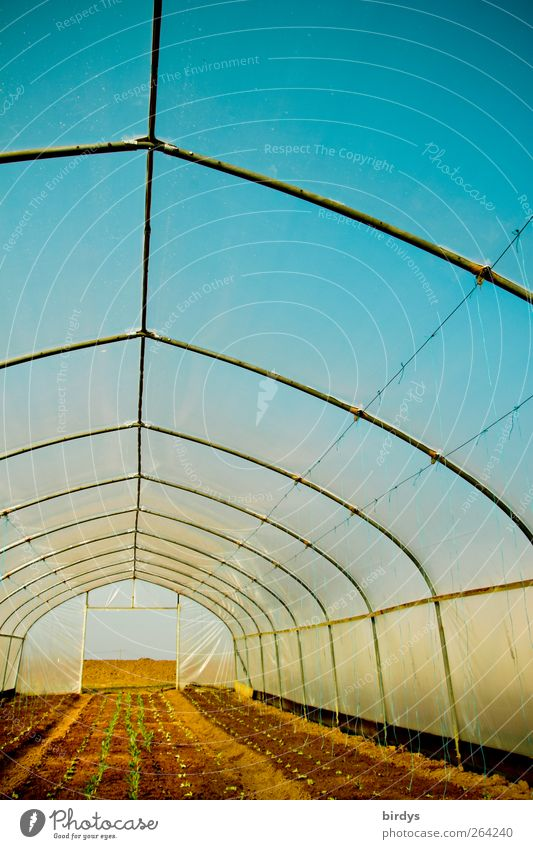 Blue Colour Yellow Bright Earth Fresh Growth Perspective Illuminate Long Positive Symmetry Cloudless sky Organic farming Way out Greenhouse