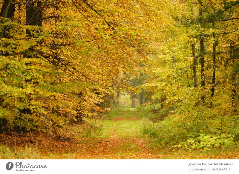 #Autumn/ Forest walk Environment Nature Plant Elements Earth Tree Grass Bushes Leaf Wild plant Deserted Sand Wood Relaxation Exceptional Uniqueness