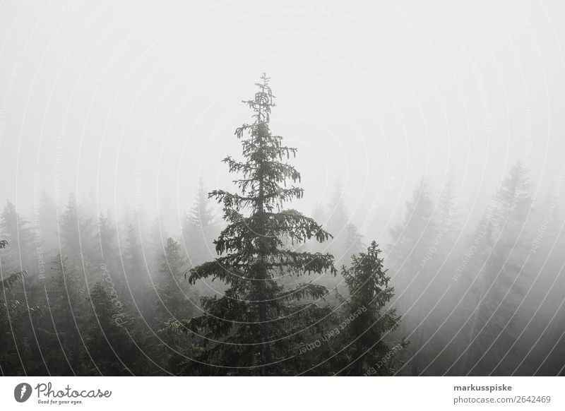 fog forest trees Relaxation Calm Meditation Vacation & Travel Tourism Trip Adventure Far-off places Freedom Expedition Summer vacation Mountain Hiking