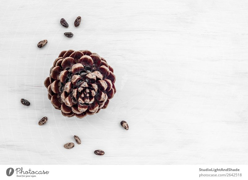 Pine tree cone and nuts on white wooden background Nutrition Eating Vegetarian diet Nature Wood Simple Natural Brown White Colour cones pine tree seeds