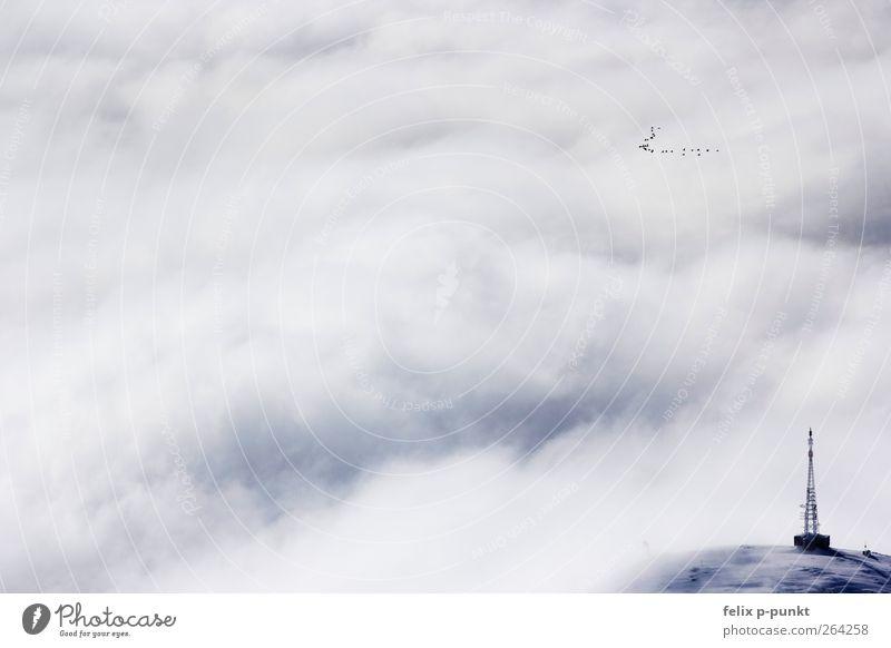 Nature Blue Winter Environment Mountain Bird Esthetic Alps Kitsch Peak Electricity pylon Glacier Snowcapped peak Cliche