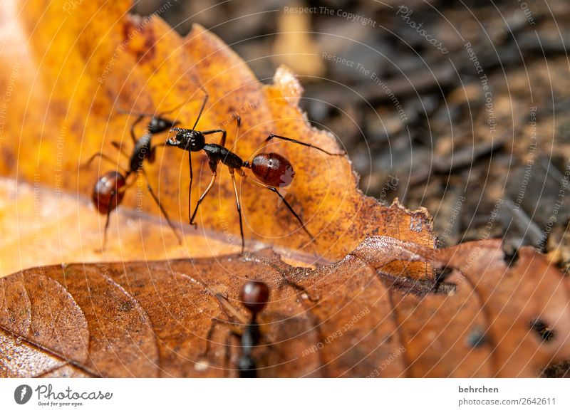 triad | three busy ants Ant animals Wilderness Insect Diligent Forest rainforest River Virgin forest giant ant flaked foliage Animal Exterior shot Colour photo