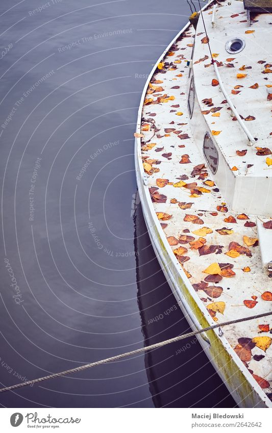 Old yacht covered with autumnal leaves. Vacation & Travel Trip Far-off places Freedom Cruise Ocean Waves Sailing Autumn Leaf Coast Lakeside River bank Beach