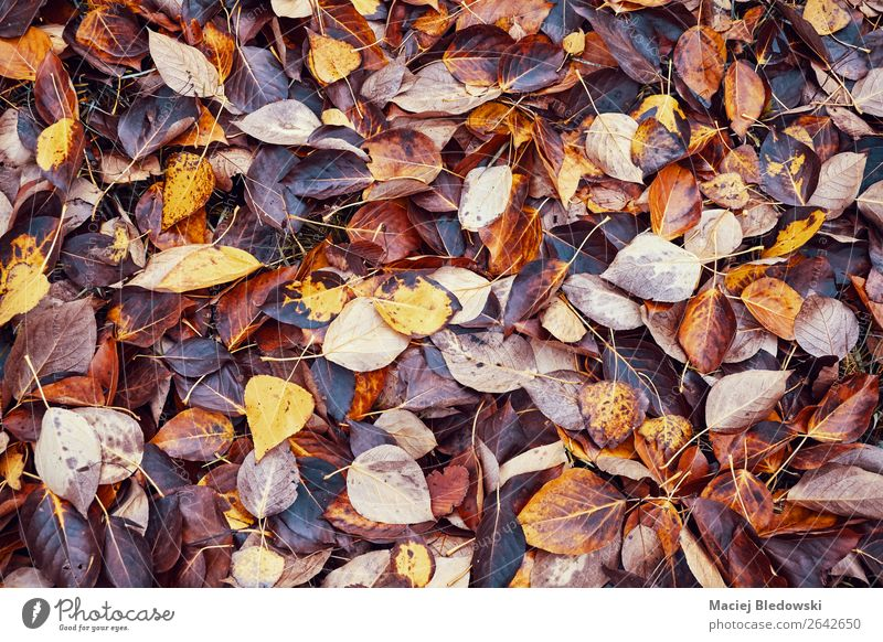 Decaying leaves, time passing concept. Garden Wallpaper Environment Nature Autumn Climate change Leaf Park Forest Brown Orange Death Loneliness Colour Fiasco