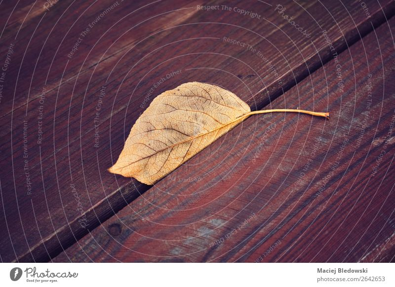 Dried leaf on a wooden table. Nature Autumn Leaf Old Sadness Retro Brown Loneliness Uniqueness End Disappointment Nostalgia Moody Death Grief Dream Past Lose