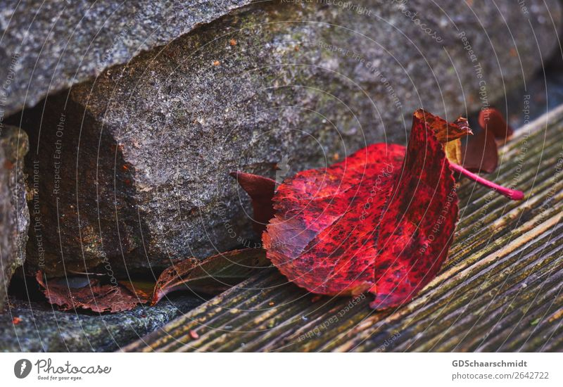 Colour frenzy in autumn Environment Nature Autumn Leaf Terrace Garden Stone Wood Observe Discover Relaxation Sadness Growth Hiking Cry Esthetic Exceptional