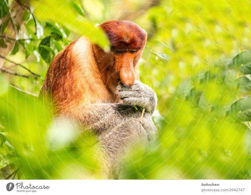 The Thinker Thought Games. Vacation & Travel Tourism Trip Adventure Far-off places Freedom Nature Tree Leaf Virgin forest Wild animal Animal face Pelt Monkeys