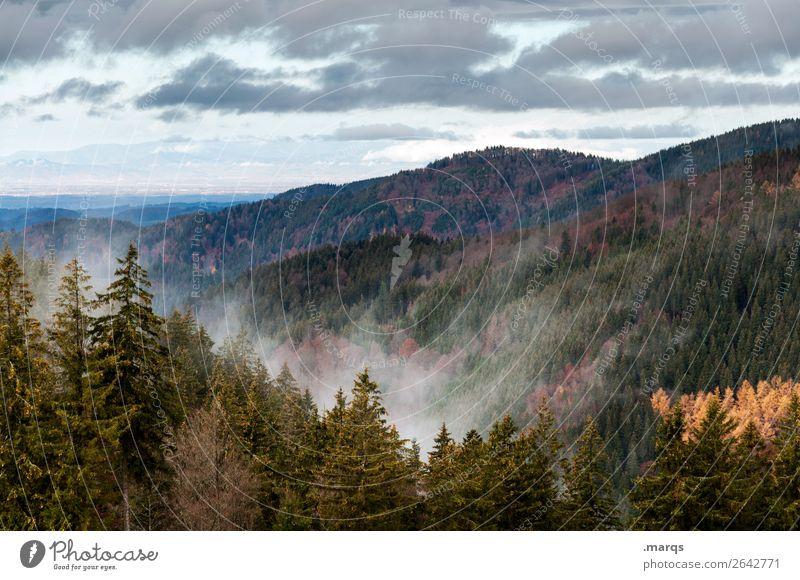 Autumn in the Black Forest Environment Nature Landscape Plant Elements Sky Fog Coniferous trees Mountain Seasons Furtwangen city Colour photo Exterior shot