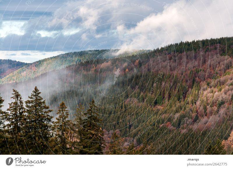 Autumn in the Black Forest Environment Nature Landscape Plant Elements Sky Clouds Fog Coniferous trees Mountain Seasons Furtwangen city Colour photo