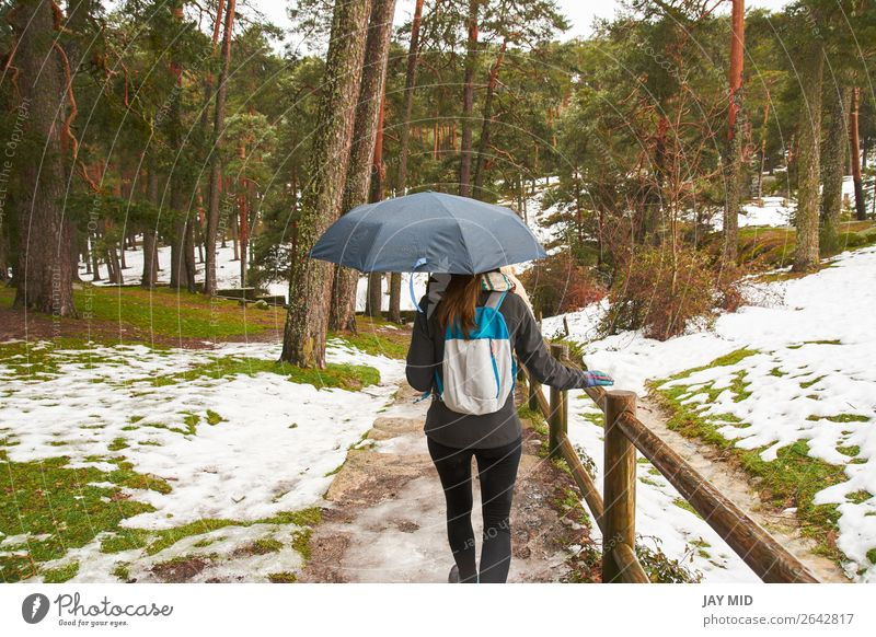 girl walking in the snow with an umbrella in hand, back Beautiful Winter Snow Hiking Human being Woman Adults Youth (Young adults) Nature Weather Snowfall Tree