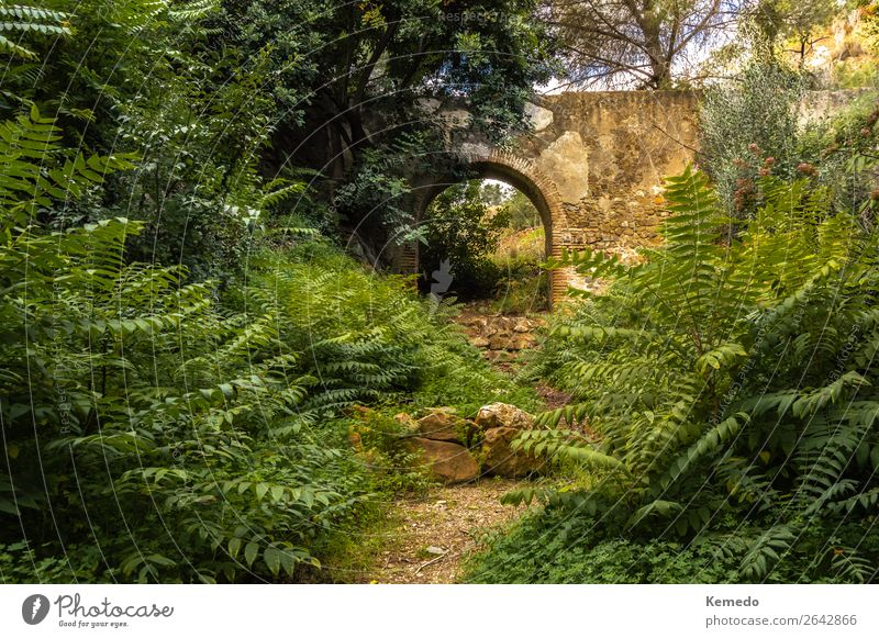 Path to the ruins of an aqueduct in a forest full of vegetation. Sky Nature Vacation & Travel Old Summer Plant Beautiful Green Landscape Sun Tree Flower