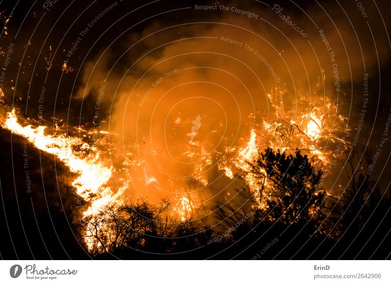 Close Up Flames Burning Brush on Hill Beautiful Environment Nature Landscape Cool (slang) Uniqueness Natural Wild Fear Colour Destruction fire brush wildfire