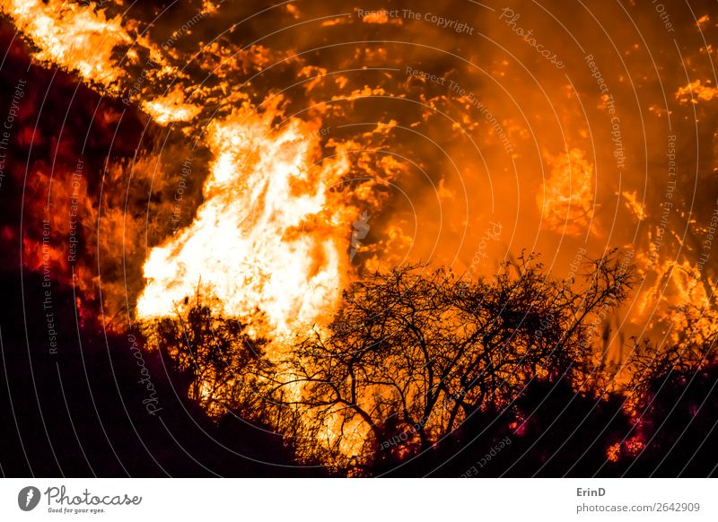 Close Up Brush in Silhouette with Flames Behind Beautiful Environment Nature Landscape Hill Cool (slang) Uniqueness Natural Wild Fear Colour Destruction fire